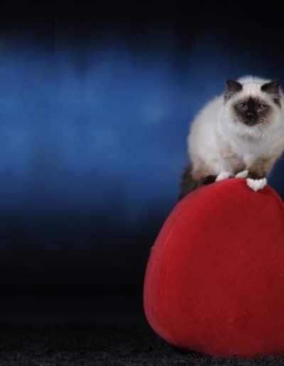 Un petit coeur ce chaton là !