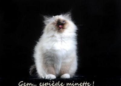 GEM Clin doeil et tire langue_4128