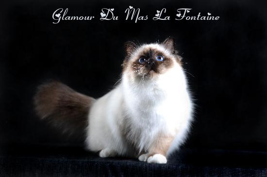 Glamour Debt_3846