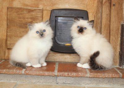 Mademoiselle et son frère
