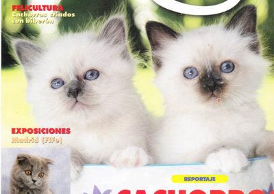 El Mundo del Gato DECEMBRE 2008