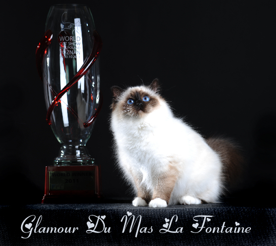 WW11 Glamour du Mas La Fontaine, CHAMPION DU MONDE 2011, Sacré de Birmanie Seal Point