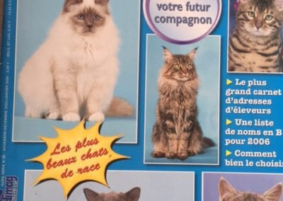Hors serie tout Chat